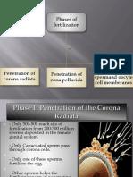 Fertilization 2 (1)