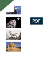 Alfabeto Animales
