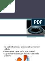 La cornea y sus anormalidades congénitas