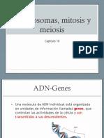 3. Mitosis y Meiosis 2016