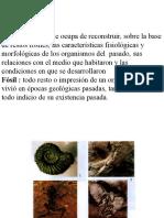 Definición de Paleo15