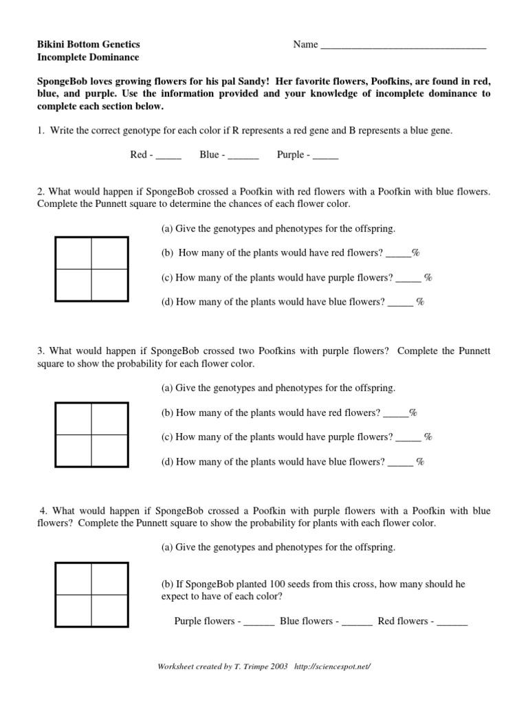 worksheet Dihybrid Punnett Square Worksheet workbooks punnet square worksheets free printable for spongebob punnett worksheet phoenixpayday com