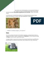 Animales Duracion Del Embarazos