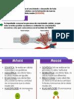 CELULA Y TEJIDO.pdf