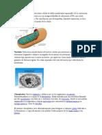 La Celula y Sus Partes