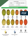 Guía Visual Grados de Maduracion Del Tomate a.V