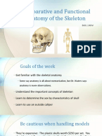 lecture comparative and functional anatomy of the skeleton xiaoxu
