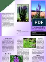 Purple Loosestrife A Wetland Invasion and Utah Invasive Weeds