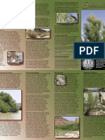 Utah Saltcedar Invasive Weeds Brochure