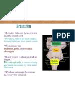 Brainstem Detailed