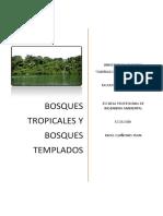 Bosques Tropicales - Tempaldos