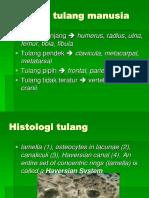Identifikasi Rangka.ppt
