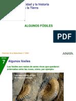 P_fosiles_123.ppt