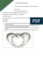 Bacia obstétrica e Relação útero-fetal.pdf
