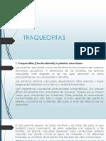 Traqueofitas Final