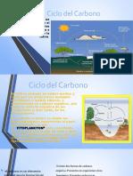 Ciclo Del Carbono Final