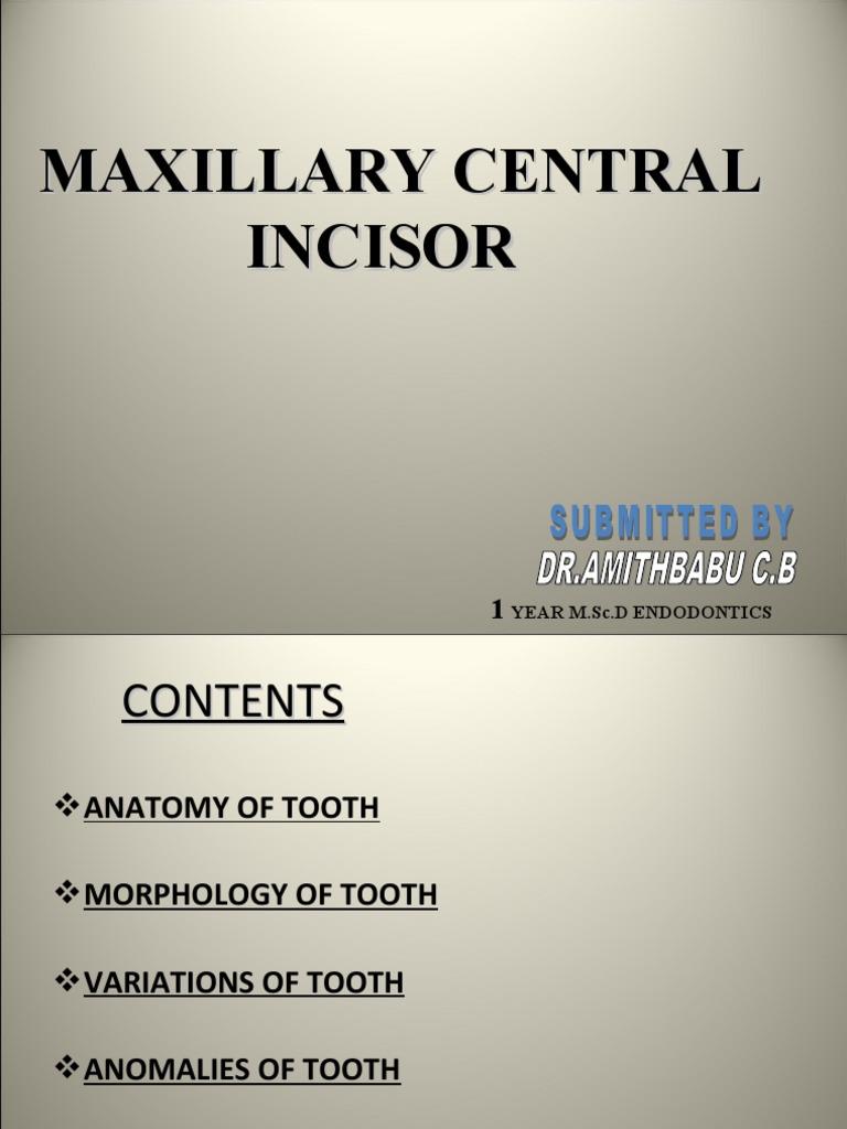 11- central incisor