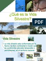 Qu Es La Vida Silvestre Cr