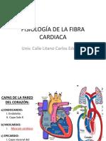 Fisiología de La Fibra Cardiaca