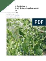 Homotoxicología en General y Lepidium Latifolium