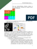 Proteínas_2015