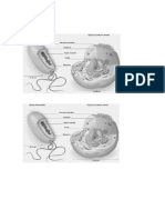 Los precursores de la actual teoría celular.docx