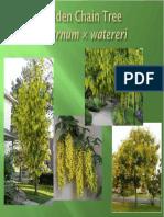 TREE SELECTION LEVEL1_PP.pdf