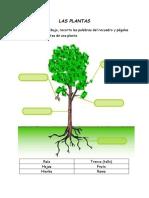 LAS PLANTAS - Las Partes de Una Planta