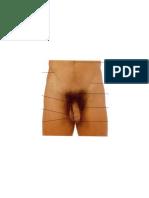 anatomi (2).docx
