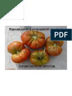 curso-semillas-jba.pdf