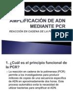 PCR diapositivas(2)(2)