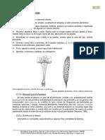 5-Onagraceae.pdf