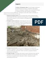4 Formas de Matar Formigas Sem Pesticidas - WikiHow