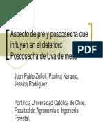 Uva de mesa.pdf