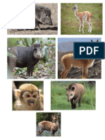 Animales en Extincion en Tarija
