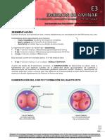 e3 - Embrion Bilaminar 2017