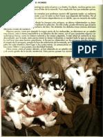 Guía del Husky Siberiano.pdf