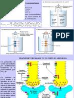 Clase16 Transporte en Membranas C