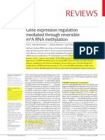 m6a Rna Methylation