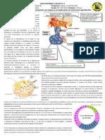 Actividad-Taller N°3 ciclo menstrual.doc