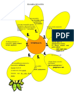 0_floarea_de_lotus.doc