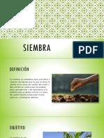 SIEMBRA.pptx