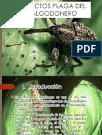 PLAGA DE ALGODONERO I.pptx