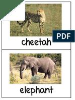 Safari Animal Photos