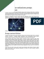 Pengertian Dan Mekanisme Pompa Natrium