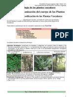Morfología de Las Plantas Vasculares