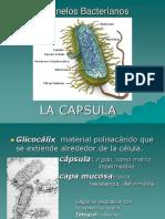 Cápsula y Biofilms.pdf