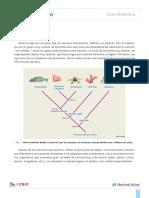 Esponjas-Guía didáctica