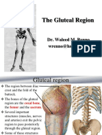 2013- Lower Limb-Gluteal Region - Student Version