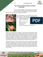 04. Factores Que Intervienen en La Induccion Floral en Frutales Caducifolios